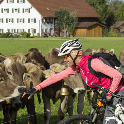 Radfahrer an der Kuhweide