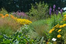 """Von den Blütenreichen Stauden der Gärtnerei """"AllgäuStauden"""" profitiert nicht nur das Auge sondern auch die Insektenwelt (Moritz Ott)"""