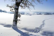 Spuren im Schnee nahe der Waldkapelle bei Leutkirch-Balterazhofen.