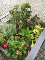Pflanzkübel mit Gemüse, Kräutern und Obst
