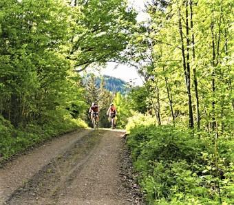 Das Bild zeigt zwei Radfahrer auf einem Waldweg