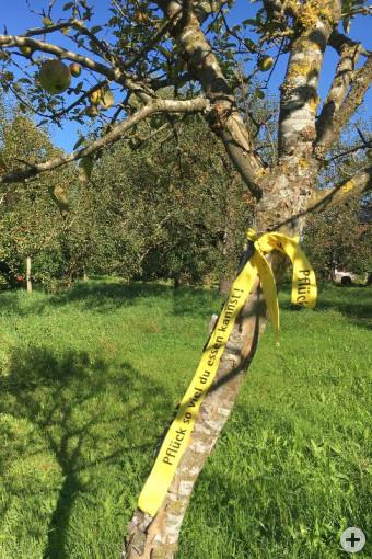 """""""Pflück so viel du essen kannst!"""": Obstbaum- oder Steuobstbesitzer signalisieren mit gelbem Band kostenlose Erntemöglichkeiten."""